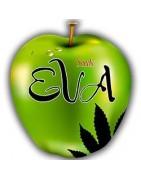 Eva Seeds. Catalogue de graines féminisées