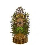 Exotic Seed. Graines de marijuana de qualité