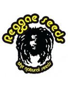 Produits Reggae Seeds