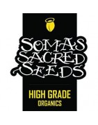 Soma Seeds Entire Seed Catalogue