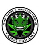 Productos The Devil's Harvest Seeds