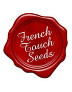 French Touch Seeds Regular