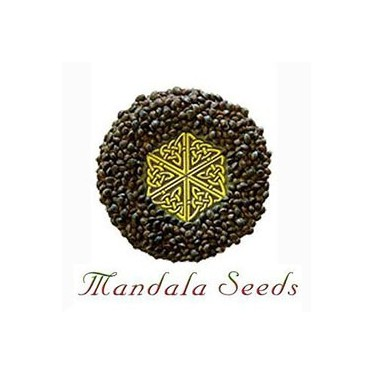 Mandala Seeds regular