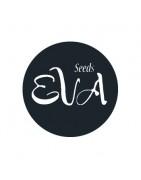 EVA Seeds feminized for cannabis growers