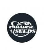 Graines féminisées de Paradise Seeds