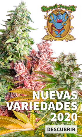 promocion sweet seeds