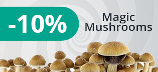 Kit Magic Mushrooms
