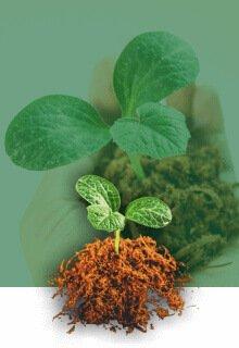 Grow Barato Categoría